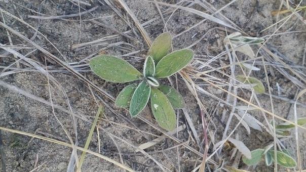 Что это за растение? Растения, Фотография, Помощь, Что это?, Длиннопост