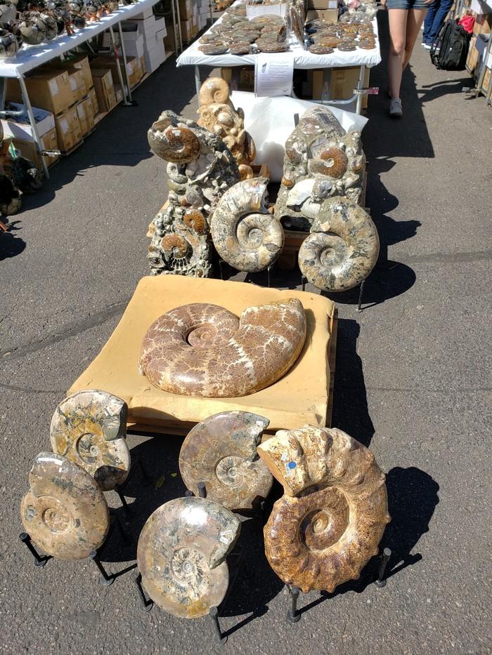 Аммониты, привет из далёкого прошлого. (Выставка минералов в Дэнвере, США) Минералы, Аммонит, Выставка, Дэнвер, Длиннопост