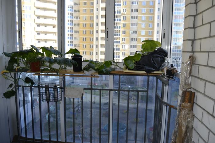 Клубника зимой: Утепление балкона. Своими руками, Земляника, Гидропоника, Видео, Длиннопост