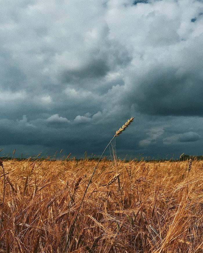Осень в поле
