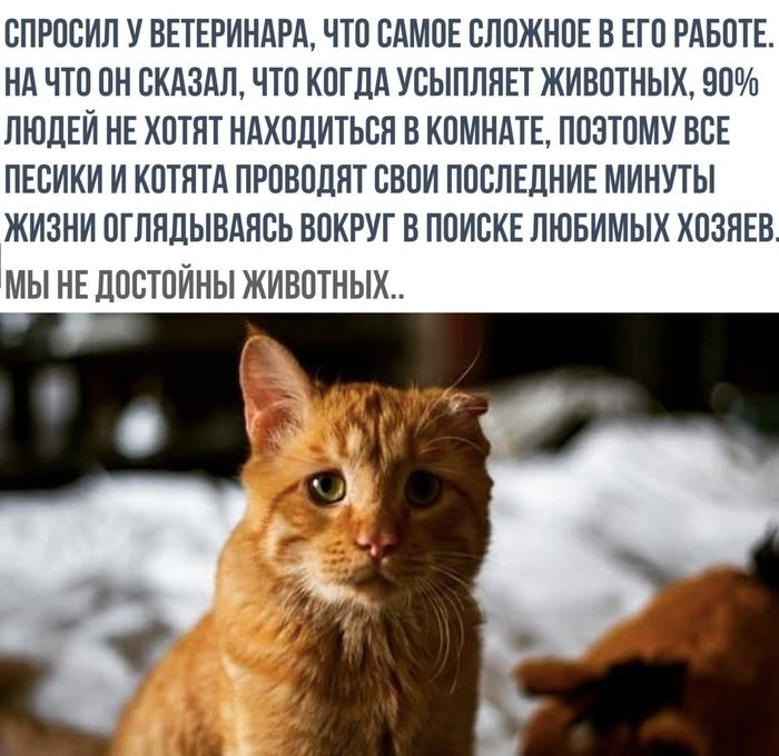 Еще о животных Из сети, Животные, Ветеринар, Кот, Грусть, До слез, Негатив