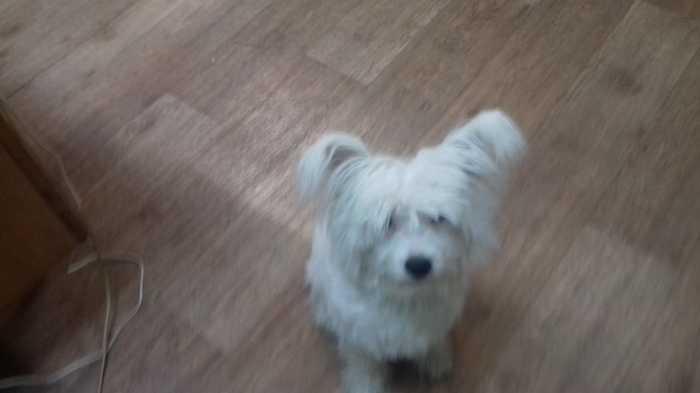 Найдена собака (Подольск, МО) Подольск, Собака, Потерялся, Потеряшка, Без рейтинга, Длиннопост