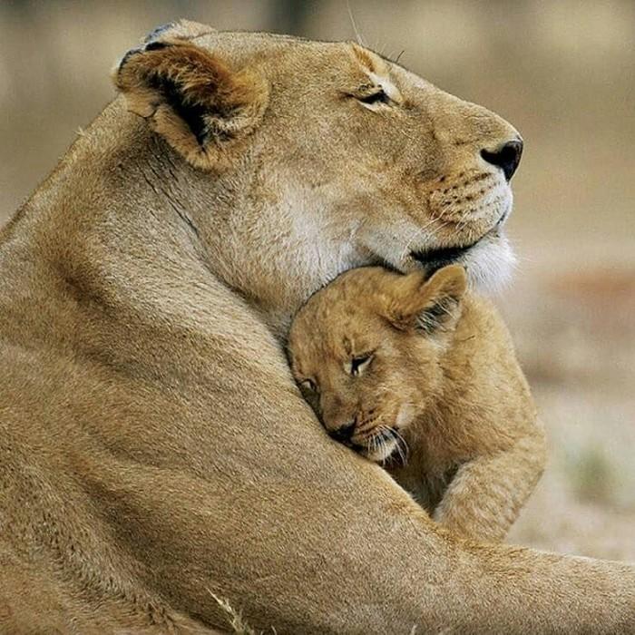 Материнская любовь.