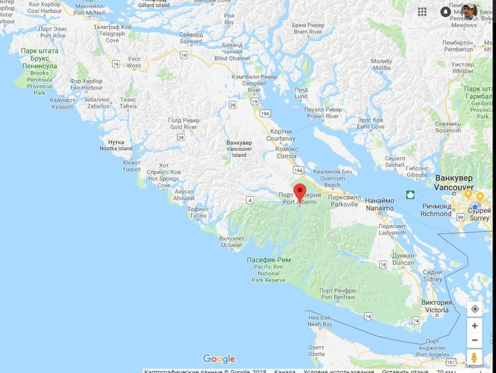 Хищник на заднем дворе, о. Ванкувер ( необычно) Канада, Британская Колумбия, Кот, Видео, Длиннопост, Хищник