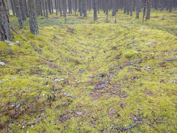 Лесные ямы. Лес, Яма, Загадка