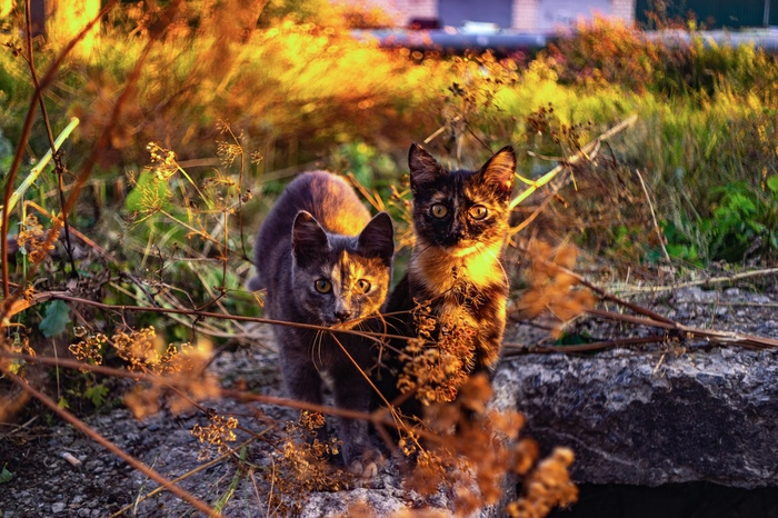 Я слышал, на пикабу любят котиков Кот, Фотография, Животные, Длиннопост