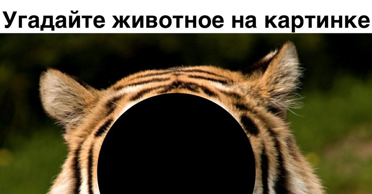 конкуренции угадай животное по картинке мем звезда предпочитает