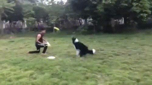 Крадущийся колли, затаившийся пёс