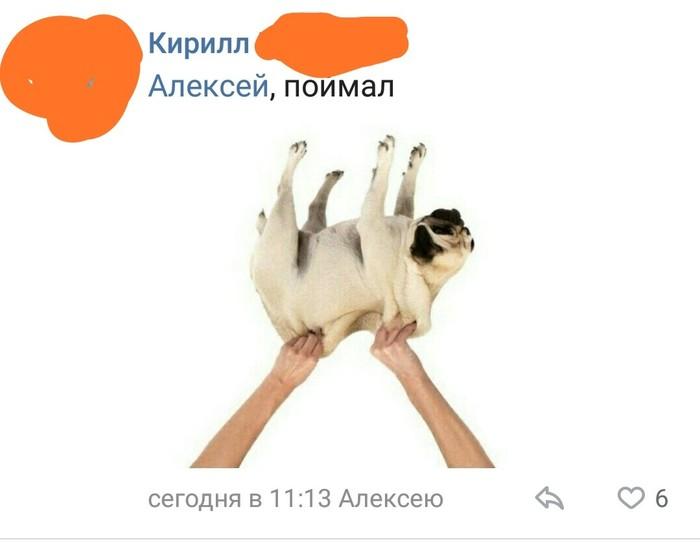 Раньше кидали денежный хлебушек ВКонтакте, Комментарии, Собака, Длиннопост