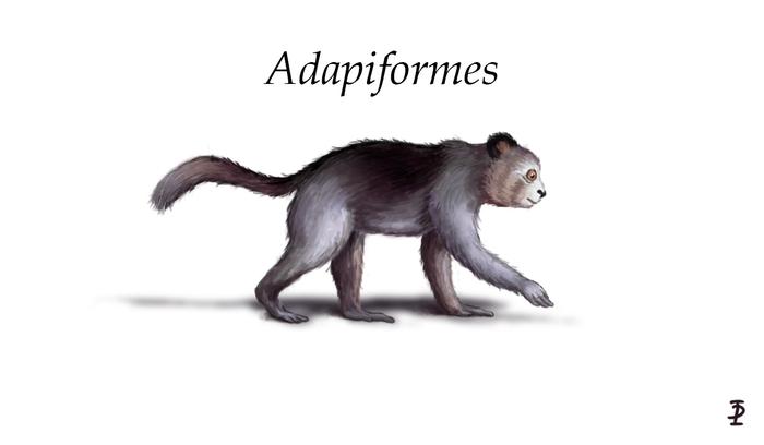 Adapiformes и Omomyiformes Антропология, Antropogenez, Палеонтология, Noosphere Studio