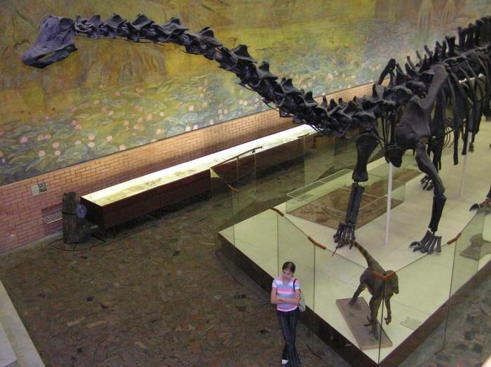Как стать гигантом, главное — не перегреться Динозавры, Зауроподы, Гигант, Наука, Палеонтология, Копипаста, Elementyru, Длиннопост