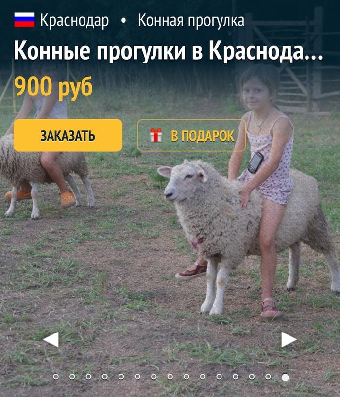 Конные прогулки Юмор, Краснодар, Реклама