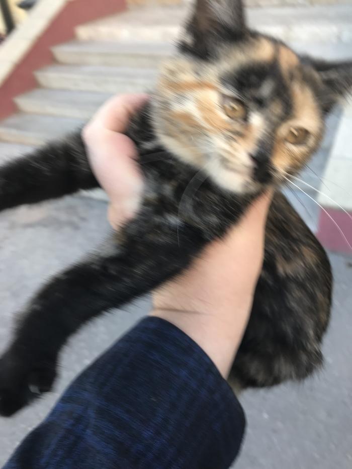 Найден котейка. (Рязань) Рязань, Кот, Потеряшка, Длиннопост, Найден кот, Без рейтинга