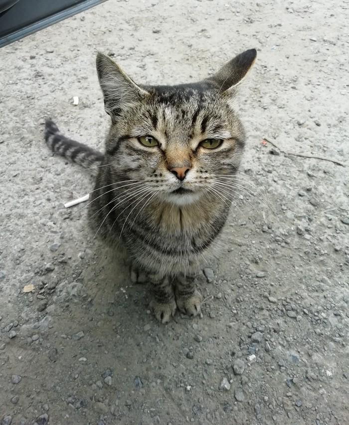 Котик грустит, что кончилось лето.