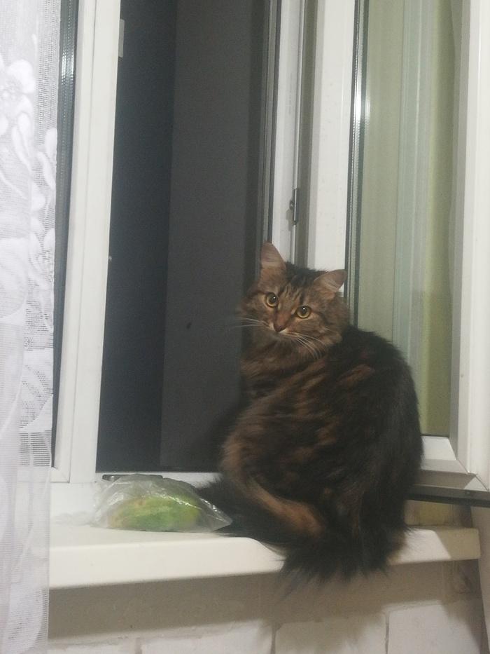 Украли кошку! Нужна помощь. Владивосток. Помощь, Без рейтинга, Пропажа, Кот, Владивосток, Длиннопост