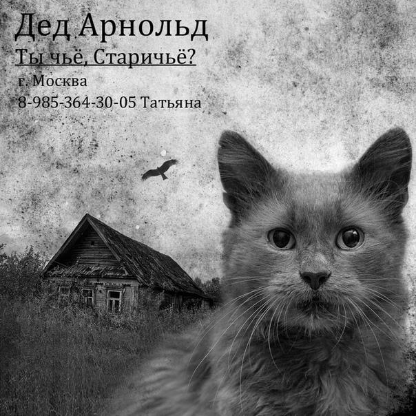 Ищем дом коту Арнольду из Бобруйск ой усыпалки. Помогаю информативно. Москва, Московская область, Кот, В добрые руки, Длиннопост, Без рейтнга