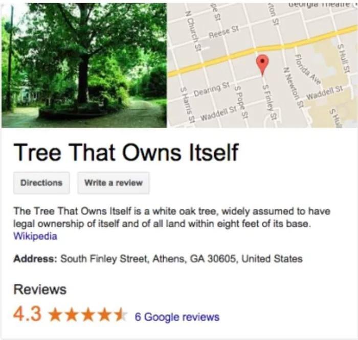 Дерево, которое принадлежит самому себе Дерево, Дуб, США, Достопримечательности, Длиннопост, Права