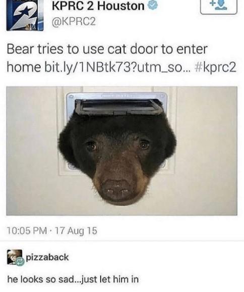 Медведь хотел влезть через дверку для кота Медведь, Нежданчик