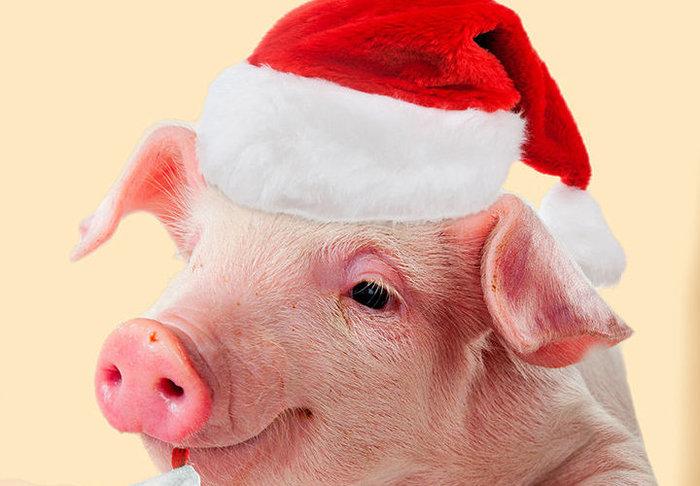 Утвержден перенос выходных дней в 2019 году 2019, Год свиньи, Праздник к нам приходит!, Длиннопост