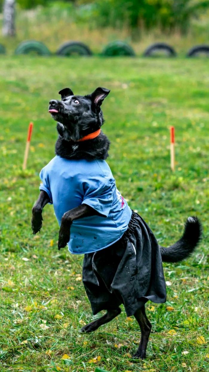 Собака-тиранозаврака Собака, Собаки и люди, Смешное