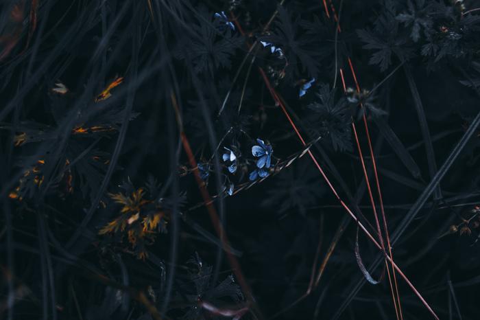 Меланхолии пост. Моё, Фотография, Гелиос, Искусство, Природа, ВКонтакте, Длиннопост