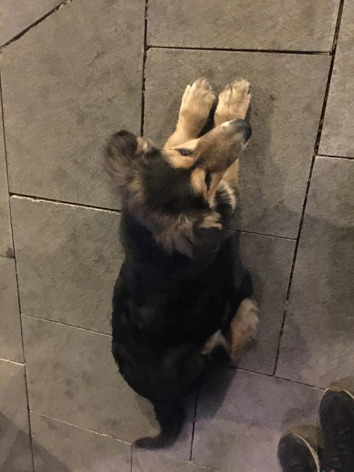 Сила пикабу, помоги! Москва, Собака, Помощь, Найдена собака, Пропала собака, Чистые пруды, Длиннопост