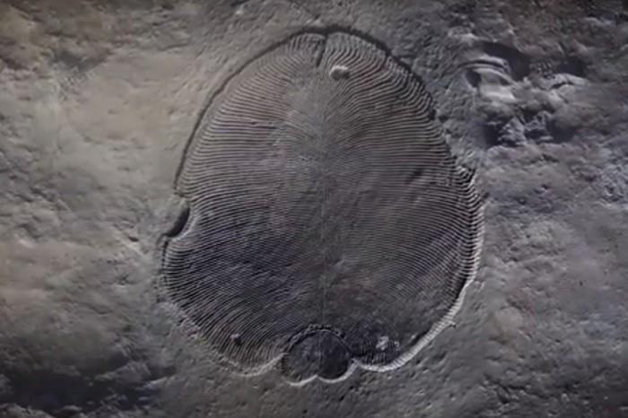 Найдено первое животное Земли Палеонтология, Животные, Первое, Видео, Длиннопост