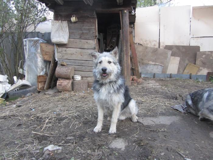 Хорошие мальчики и девочки ищут своего человека Без рейтинга, Собака, Питомник, Помощь животным, Москва, Длиннопост