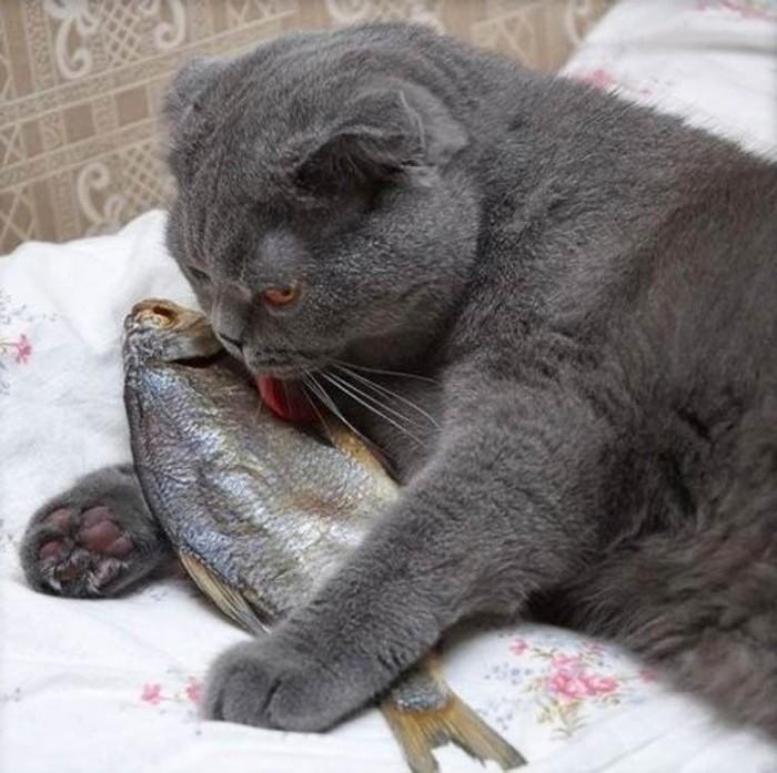 Рыбка Юмор, Гарнитура