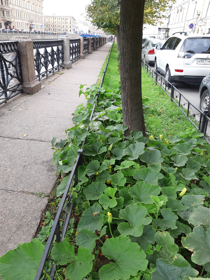 Огород в городе Санкт-Петербург, Чудо рассада