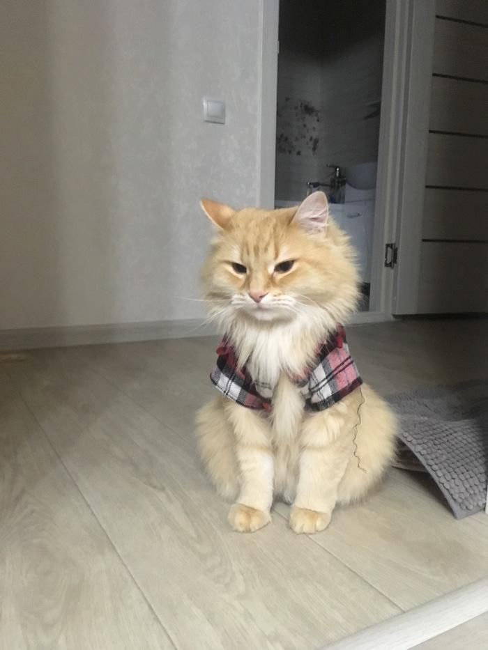 Записки кота Тимофея. Утречко Кот, Случай из жизни, Домашние животные, Фотография, Длиннопост
