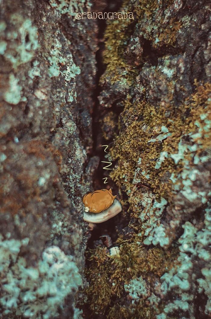 Отдых в лесу :3 Лес, Милота, Отдых на природе, Арт, Длиннопост