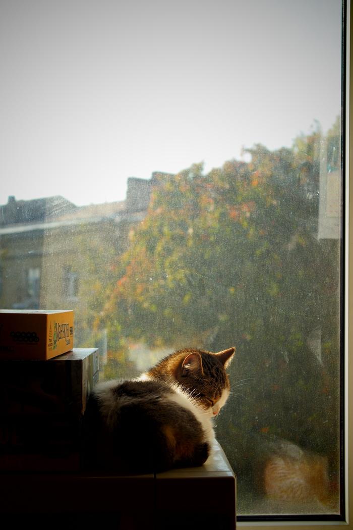 Осенняя пора Котомафия, Кот, Осень, Длиннопост