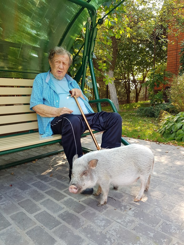 Старики вы мои старики, дайте я вас сейчас расцелую... Мини-Пиг, Свинка, Милота, Нежность, Хрю, Хрюша, Свинья, Хрюндель, Длиннопост