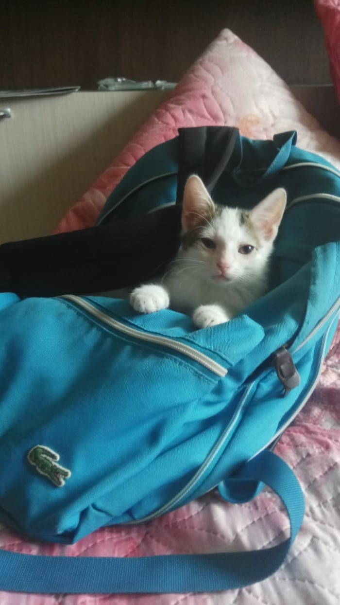 Котенок хочет домой! Москва, В добрые руки, Кот, Длиннопост