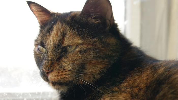 Просто грустная история про кошку Кот, История, Грусть, Воспоминания