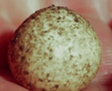 Эти фотографии показывают редкие кадры вылупления яйца утконоса. Утконос, Животные, День рождения, Вылупление, Яйцо, Биология, Фотография, Дети