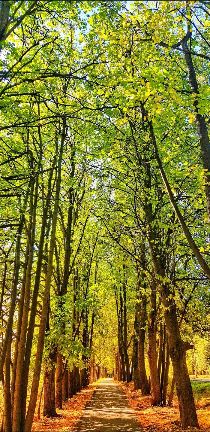 Переход от лета к осени. Осень, Природа