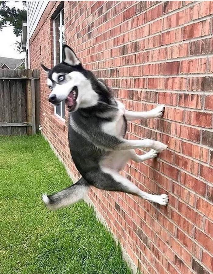 Дорогой, наш пёс опять начал ходить по стенам