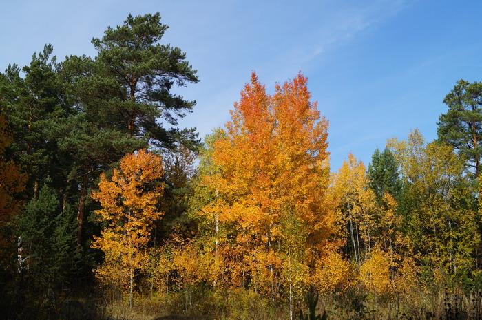 Красота сентябрьского леса Лес, Осень, Сентябрь, Природа, Длиннопост