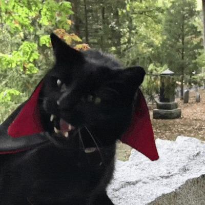 Пушистый Дракула