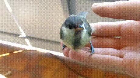 Отпути Птицы, Пальцы, Нипутю, Животные, Гифка
