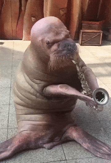 А я играю на саксофоне у прохожих на виду...