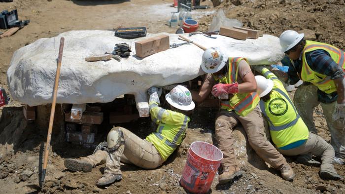 В Калифорнии нашли останки древнего кита, который может принадлежать к еще не открытому виду, прямо на мусорной свалке Палеонтология, Кит, Наука, Биология, Животные, Эволюция, Длиннопост