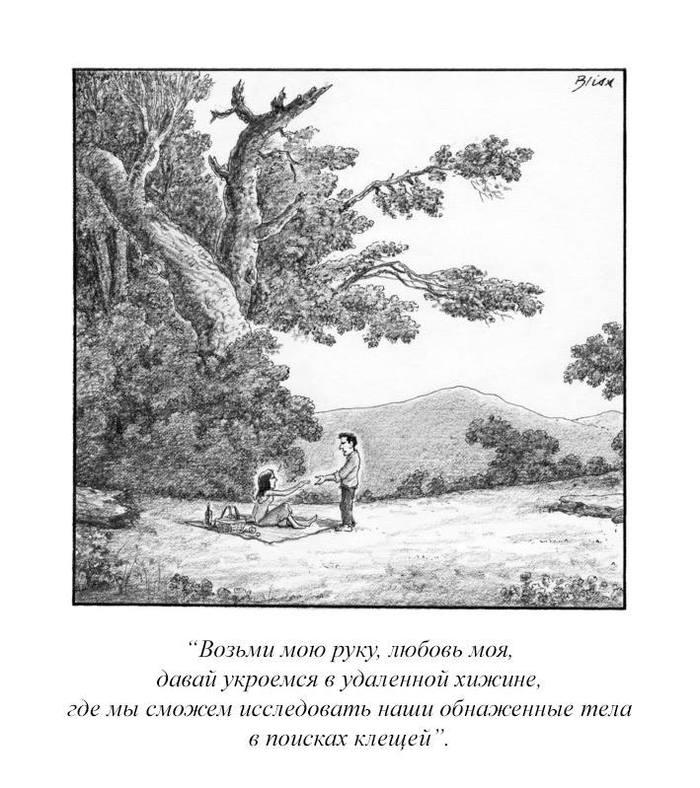 Романтика леса