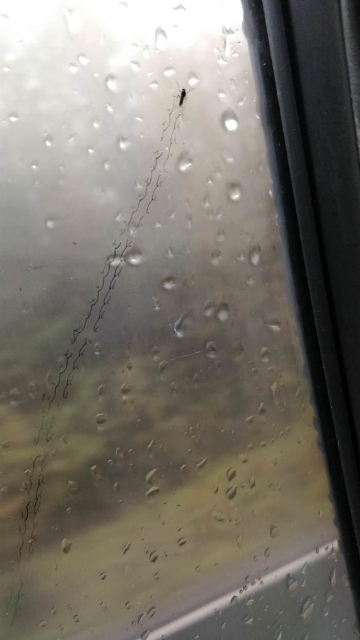 Путешествие комара по стеклу моего авто