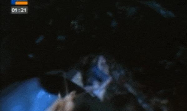 Бабочки вампиры из Сибири и не только Бабочка, Вампиры, Биология, Энтомология, Наука, Гифка, Видео, Длиннопост