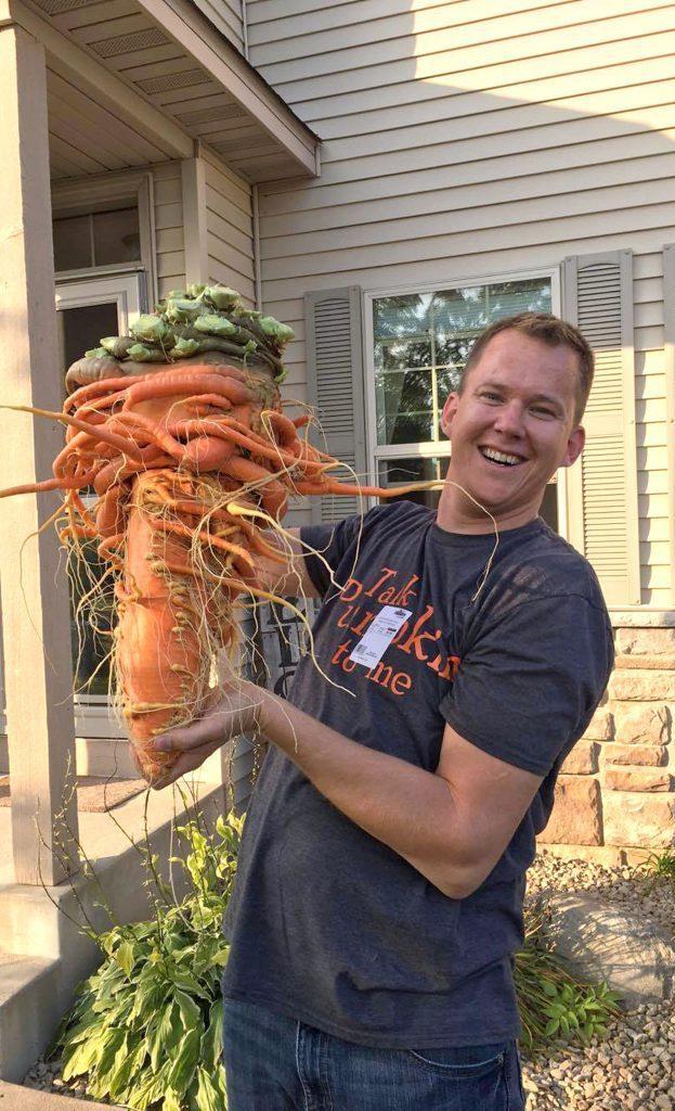 Морковка США, Миннесота, Овощи, Морковь, Длиннопост