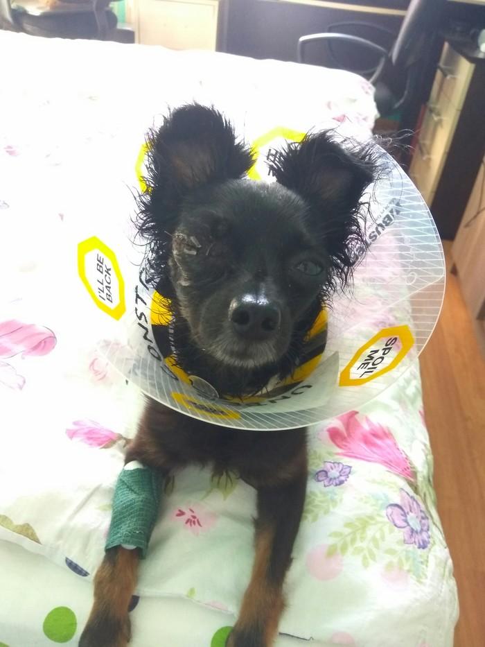 Соседский питбуль напал на меня и мою собаку. Прошу помощи лиги юристов! Порча имущества, Лига юристов, Собака, Помощь, Без рейтинга