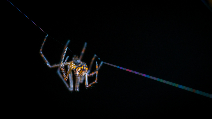 Паучья попа и радужная паутинка Макро, Макроохота, Паук, Арахниды, Паутина, Mp-e 65 mm